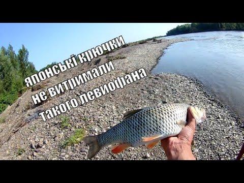 Ловля Голавля на Спиннинг с Берега летом . Рыбалка .р.Тиса