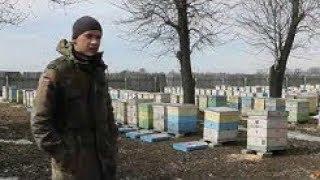 Алексей Жорновый ( Борец )- содержание на 145 рамку .Пасека 400 семей.