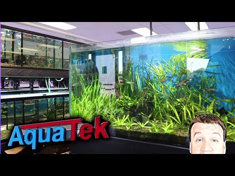 YOU GOTTA SEE!! MONSTER MODERN Fish Store Tour - AquaTek - Austin, Texas