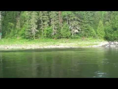 28lbs Atlantic Salmon On A Dry Fly 2012