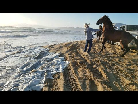 Mexican Cowboys get saved by the AMERICANS from going under at pismo beach dunes.