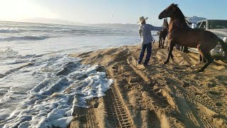 Horse time Pismo Beach Dunes  Mexican Cowboys get saved by the AMERICANS  from going under