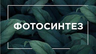 Фотосинтез | ЕГЭ Биология
