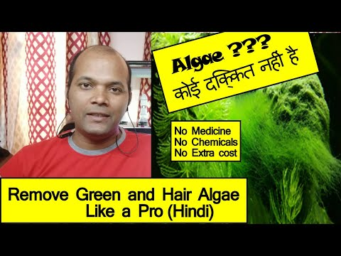 Fix Green And Hair Algae Issues With No Cost Like A Pro (Hindi) | Part 1
