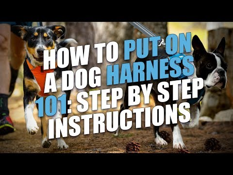 how to put on a dog harness 101 step by step instructions youtube. Black Bedroom Furniture Sets. Home Design Ideas