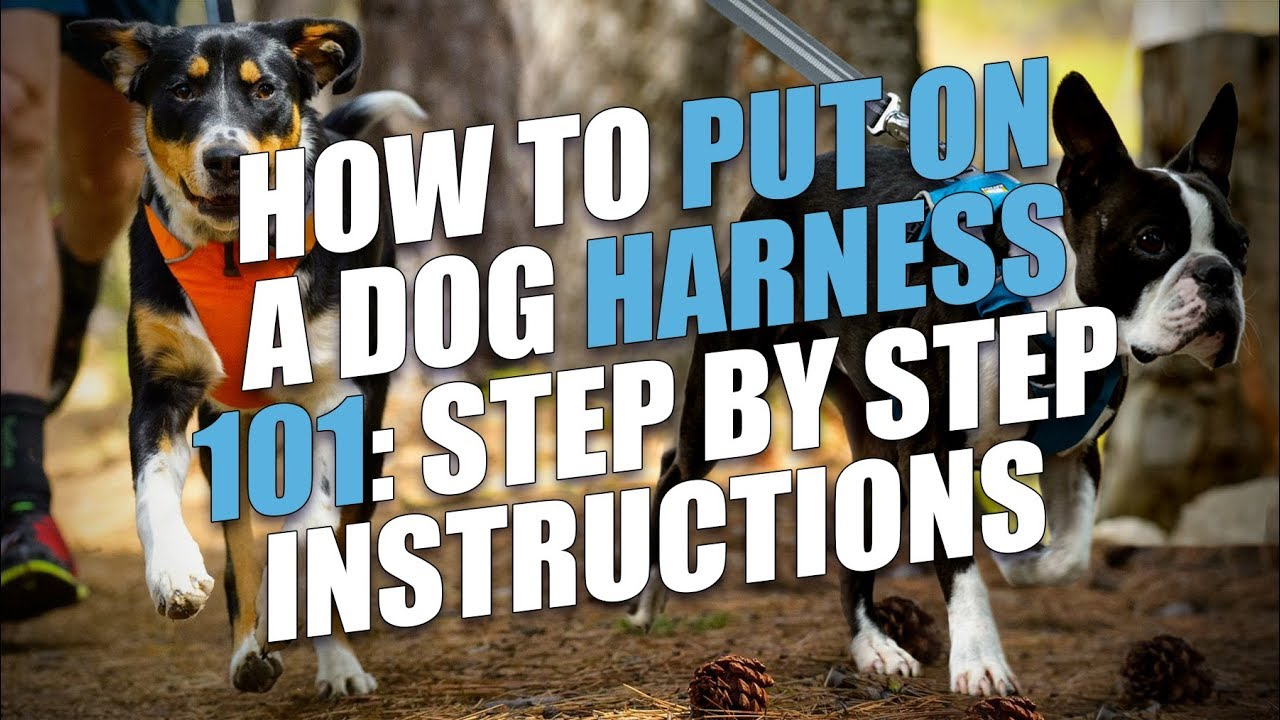 How To Put On A Dog Harness Step By Step Instructions Youtube