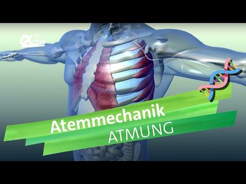 Atemmechanik | alpha