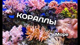 Кораллы. Энциклопедия для детей про животных. Море
