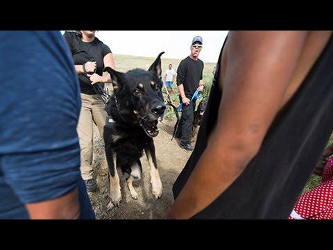 Dakota Access Pipeline Protests Face Pepper Spray, Attack Dogs