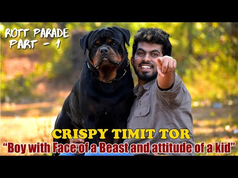 CRISPY TIMIT TOR || Rott Parade : PART 1 || Top Leading Rottweilers in INDIA