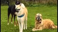 Hundesozialtreff / Raufergruppe 17.10.2015
