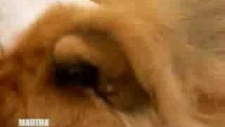 Grooming Paw Paw | Martha Stewart