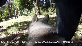 Gopro Fetch Harness Test W/bella The Siberian Husky