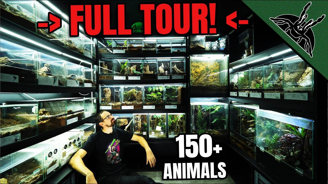 Animal Room with 150+ ANIMALS...YOU WILL SEE ALL - download from YouTube for free