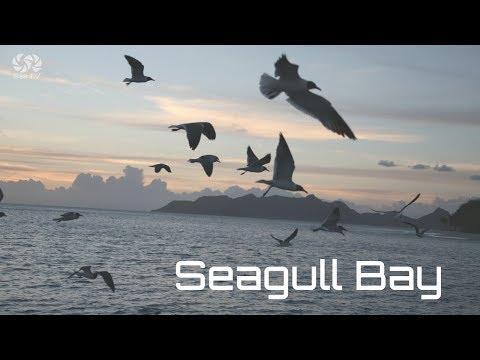 Sailing in Turkey   SEAGULL BAY  SeaTV