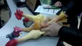 Курицы кричат!!! УГАР! =)