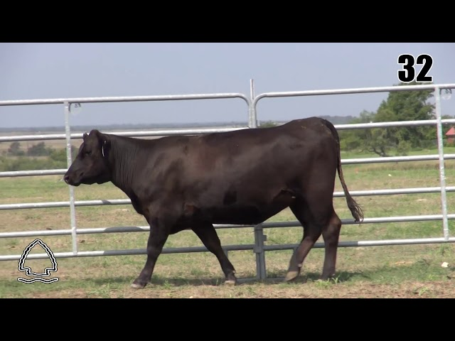 Pearcy Angus Ranch Lot 32