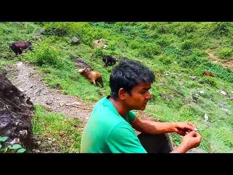 #THADI BHAKA गोरु चराउन जानेबेला