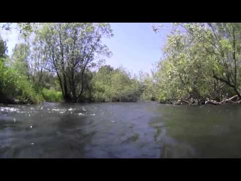 Over the Sammamish River weir   26May2012