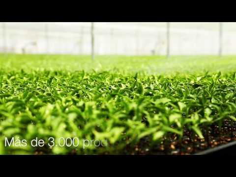 Mundoriego | La Wikipedia del Riego Agrícola thumbnail