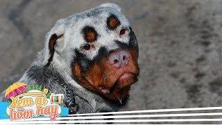 10 Giống Chó Hiếm Chỉ Còn Lại Vài Con Trên Toàn Thế Giới