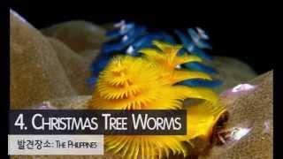 BBC 선정, 바다의 괴상한 생물들 10(10 weird underwater creatures)