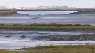 Großbritannien: Die Vogelinsel der Superlative   Europa Aktuell