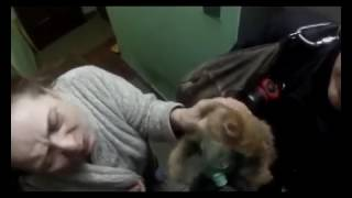 Российские пожарные спасли кота от отравления угарным газом Во время пожара в мн