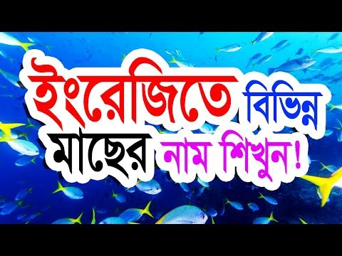 English To Bangla (Name Of The Fish) By IT Future.