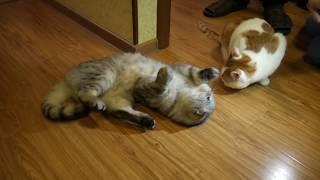 Кошачья мята или мятный трип (ламповый видос)