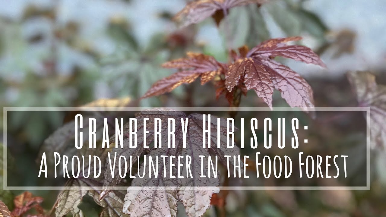 Edible Plants That Plant Themselves 2 Minute Tuesday Cranberry