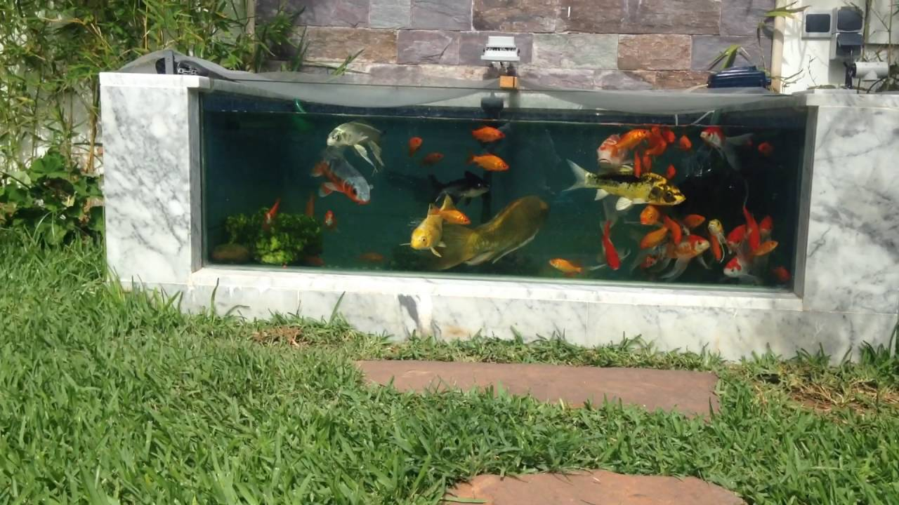 Aquarium en jardin youtube for Jardin 8 zapala