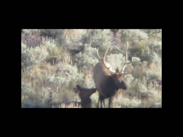 Tavaputs Ranch Hunting