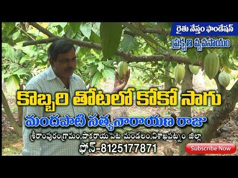 Coconut INTER CROPS COCO Natural farming  by M S RAJU