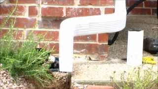 How To Install Underground Downspouts  with Pop-up Drains