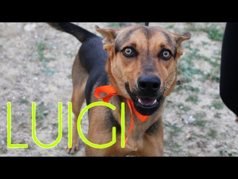 Luigi protectora de animales m laga youtube for Protectora de animales malaga ciudad jardin