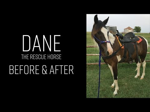 Dane (The Rescue Horse) Before and After