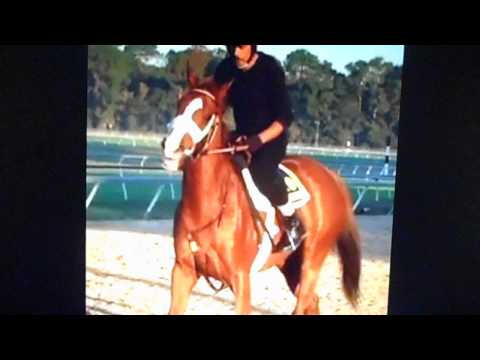 Talking Race Horse