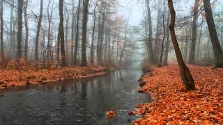 Ravel - String Quartet in F major - Borodin Quartet