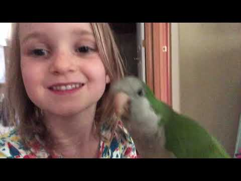 Why I Let Lefty The Quaker Parrot BITE My Niece