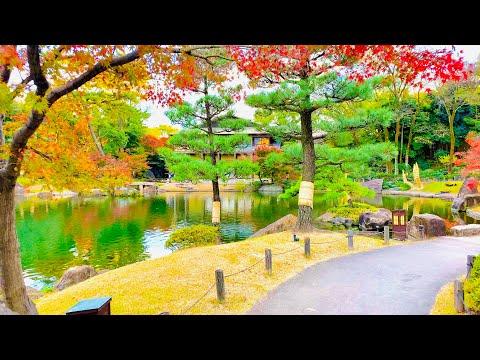 4K Japan Walk - Beautiful Japanese Garden in Nagoya (Tokugawaen)   Koi Fish   Nagoya Winter 2020