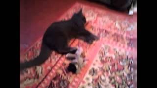 Бой кота и мышки, не на жизнь, а на смерть