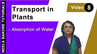 Transport in Plants - Absorption of water