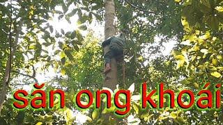 Hành Trình Săn Bắt Tổ Ong Khoái Trên Ngọn Cây Cổ Thụ Và Cái Kết. Nguyễn Cường TV