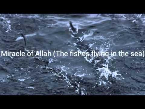 Miracles Of Allah 2014 Miracle of Allah (The ...