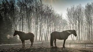 Живая природа вокруг вас восхитительные фотографии животных