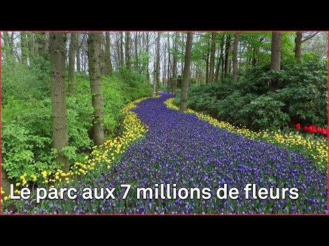 Keukenhof, le plus beau parc floral d'Europe