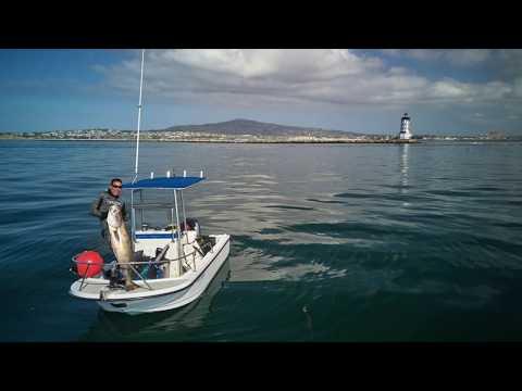 White Seabass Spearfishing