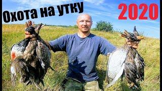 Откуда столько утки? Охота на утку 2020 Открытие охоты 2020 Стрельба по уткам из 12 калибра Ружьё 12