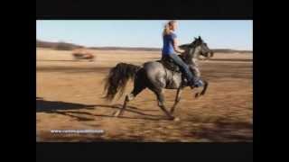 Speed Racking Horse Pretty Boy Floyde